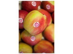 manzana pink lady castellon