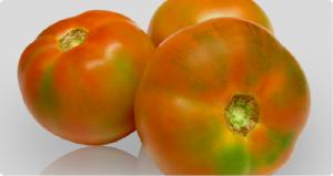 tomate de ensalada castellon